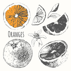 Sketch of citrus. Fresh organic orange.