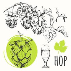 Hop set. Vector illustration with branch of hops.