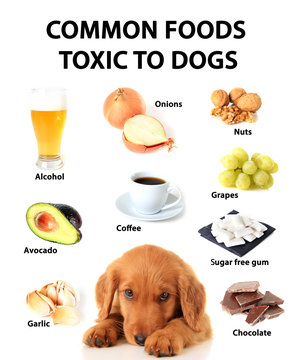 Foods toxic to dogs.