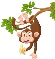 Cartoon happy monkey hanging and holding banana