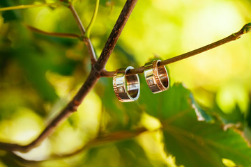 Two wedding rings on a branch with blurred backgroung
