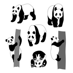 Set of graphic panda.