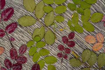 autumnal background texture. photo of leaves on wood.