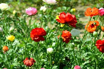새봄의 만개한 봄꽃이미지
