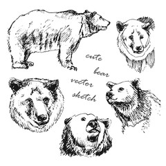 hand drawn illustration of a bear in the different corners