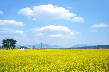 유채꽃과 새봄의 풍경이미지