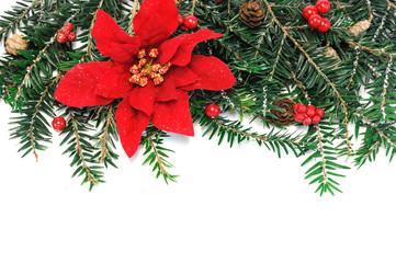 Christmas poinsettia flower, pine tree branch and mistletoe for decoration