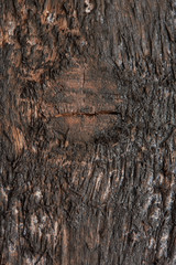 texture of a dark wooden board