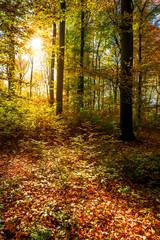 Wald im Herbst mit Sonne