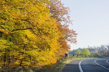 Las w pięknych jesiennych kolorach w pogodny dzień. Pięknie wybarwione jesienne liście na drzewach w lesie.