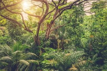 Sun shining into tropical green jungle