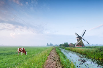 Poster Mills cow grazing on pasture by river and windmill