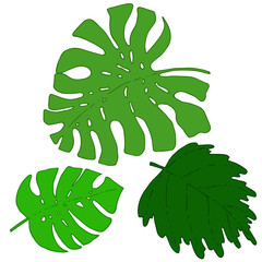 Vector tropical plant leaves set, momstera tree