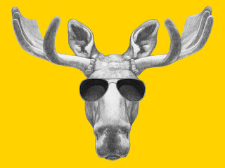 Portrait of Moose with sunglasses. Hand drawn illustration.