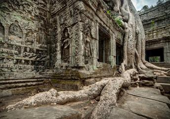 Ta Prohm Budhist Temple at Angkor Cambodia