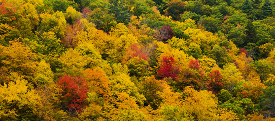 Colorful autumn tree colors as a background