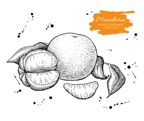 Vector hand drawn mandarin illustration. Engraved collection