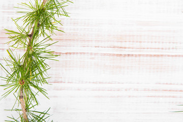 coniferous tree branch on a white wooden background