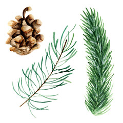 Set of fir branches. Watercolor hand drawn