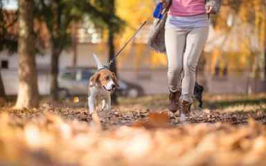 Girl with her Beagle dog jogging in park