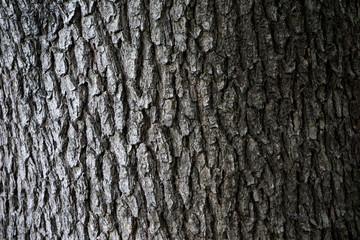 木の幹アップ