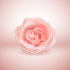 Vector 3d realistic pink Rose on pink background.