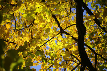 Autumn green yellow heavy foliage