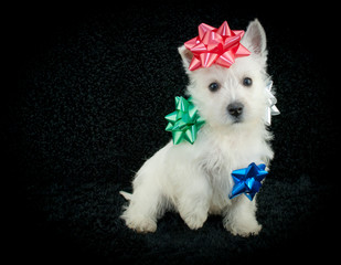 Wall Mural - Christmas Puppy
