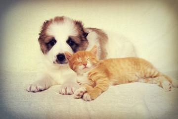 Puppy and kitten instagram