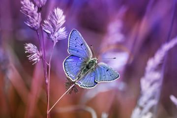 маленькая бабочка среди травы в сиреневых тонах