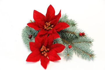 poinsettia and pine branch for Christmas decoration
