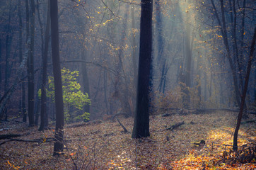 Sunbeams pour into the dark autumn forest