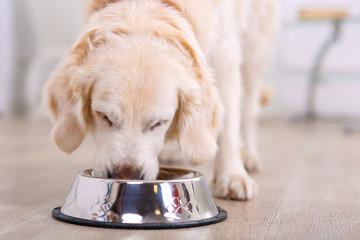 Nice dog eating