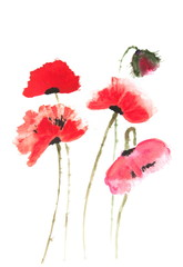 Red poppy flowers on white, Acrylic color painting