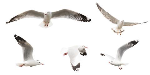 Flying Sea Gulls set, isolated on white background
