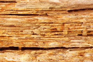 Background of sedimentary rock