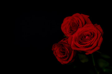 Three roses on black background, out of focus