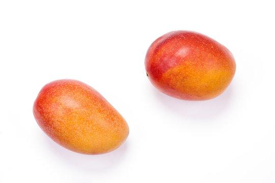 白バックのマンゴーの実