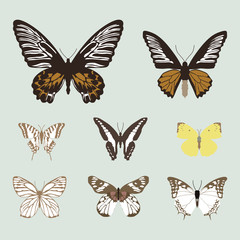 collection of realistic butterfies, animal vector illustration
