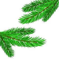 Fir Green Branches