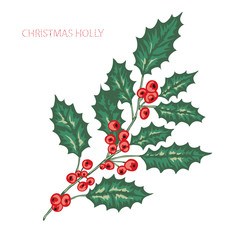 hand drawn holly