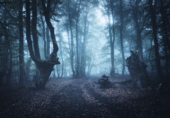 Wall Murals Bestsellers Dark autumn forest in fog. Beautiful natural landscape.