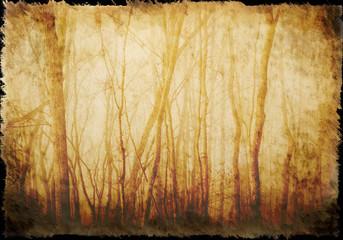 Altes Papier, mit Waldstruktur, Hintergrund