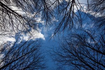 Gökyüzüne Uzanan Ağaçlar