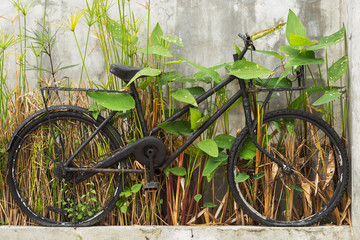 Old bicycles and plants