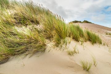 Zeeland (NL) - Nordsee - Dünen mit Dünengras