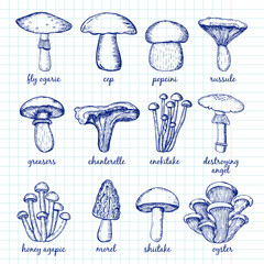 Vector Set of  Mushrooms
