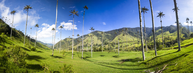 Cocora valley with giant wax palms  near Salento, Colombia