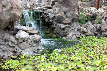 Plants and man-made waterfall in the pond