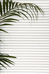 Plant against blinds